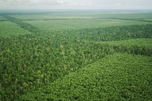 APRIL to colaborate on forest High Carbon Stock standard.