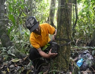 RER forest ranger installing wildlife camera monitor