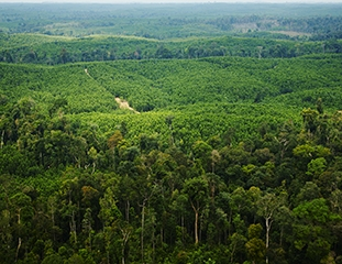 Sustainable Forest plantation