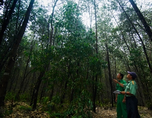 APRIL staff at forest plantation