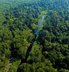 APRIL Manages High Conservation Value Forest